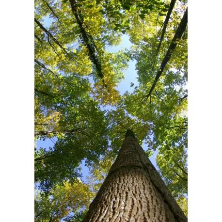Atelier ballade dans la forêt du monde